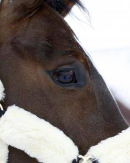 Kentucky Horsewear Transporthalfter Detail