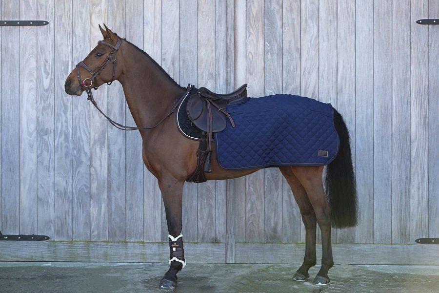 Kentucky Pferd
