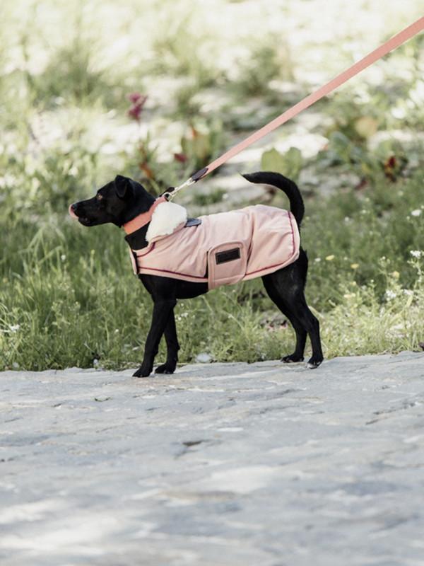 Hundemantel-Koralle-Wasserdicht-Hund