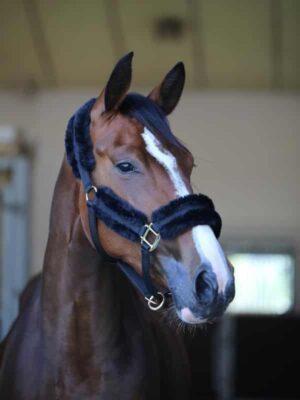 Kentucky Horsewear Nylonhalfter Schaffell Schwarz