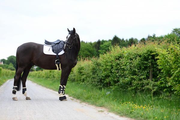 Kentucky Horsewear Hufglocken Schaffell Seite
