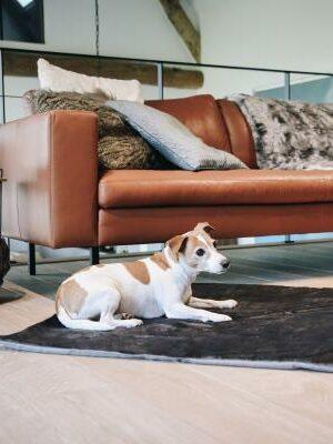 Kentucky Horsewear Hundebett Style Hund