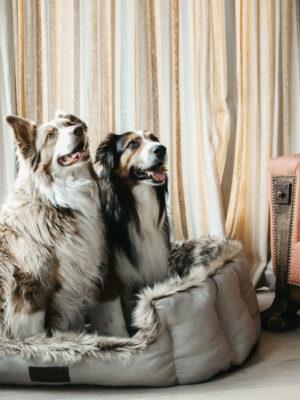 Cave-Hundebett-Hunde