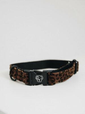 Leopard_Braun