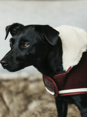 Kentucky-Dogwear-Hundemantel-Heavy-Fleece-Hund