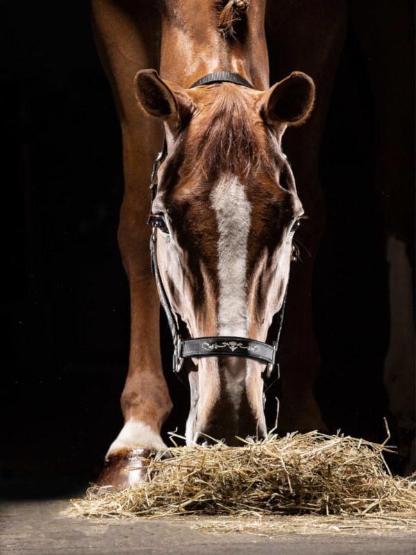 Equiline-Timmy-Pferd